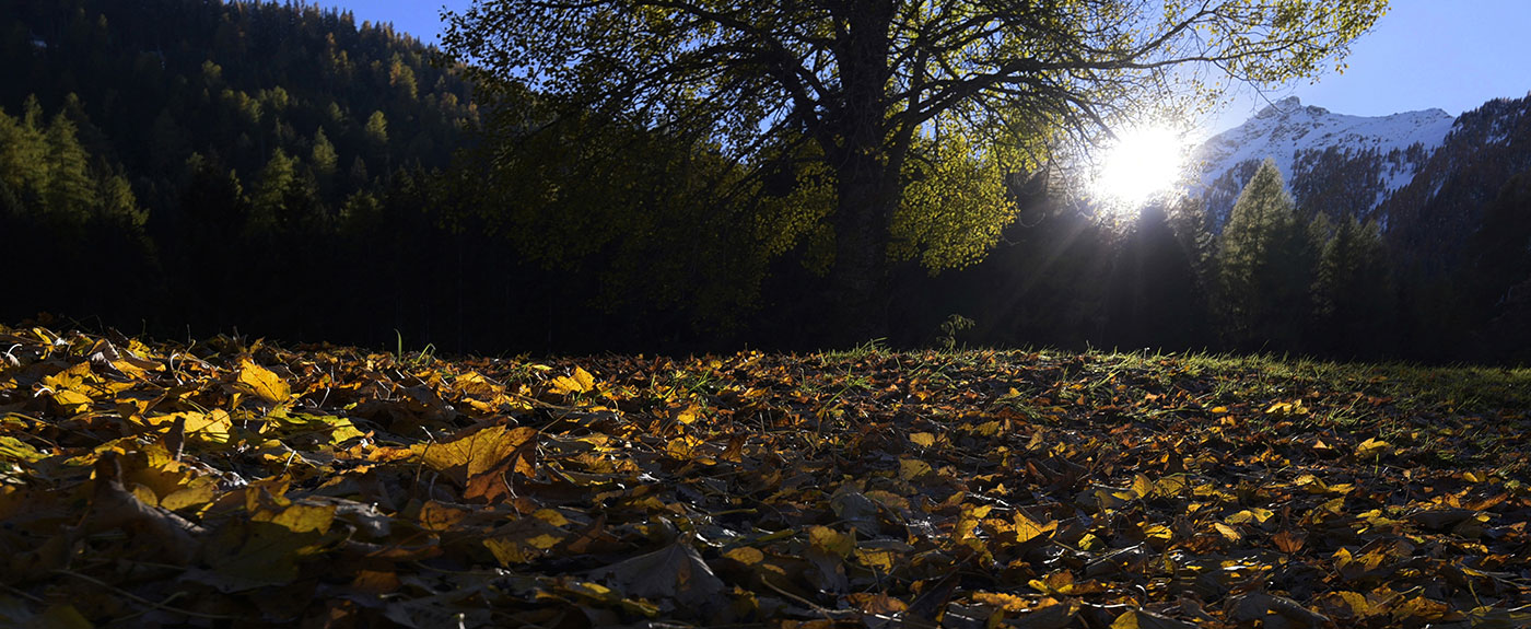 Autumn light on a clearing