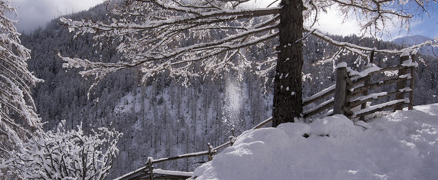 Snowy trees and hiking path in winter